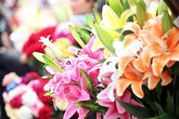 Hoa lụa giả đẹp như thật và nhiều loại hoa mới hút khách chơi Tết giữa Thủ đô
