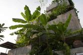 Ngôi nhà nhìn đâu cũng thấy cây xanh như rừng nhiệt đới với hơn 40 loại cây