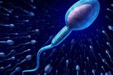 Giải mã tại sao cơ thể phụ nữ chỉ nhận một tinh trùng để thụ tinh