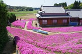 Người đàn ông Nhật dành trọn tình yêu để trồng đồi hoa trước nhà suốt 4 năm tặng vợ mù lòa