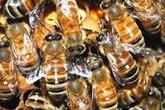 Nghệ An: 7 người nhập viện vì bị ong rừng tấn công khi đi tảo mộ