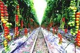 8 mẹo giúp khu vườn của bạn tươi tốt trong mùa xuân để đón chào những đợt thu hoạch mới