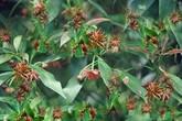 Thâm cung bí sử (170 - 1): Biệt danh hoa hồi