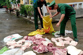 Quảng Ninh chủ động phòng chống dịch tả lợn châu Phi