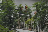 """Bất chấp nguy hiểm, phóng viên nước ngoài leo lên tầng 2 để """"săn"""" ảnh ông Kim Jong-un"""