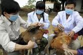 Hà Nội: Yêu cầu tăng cường tiêm phòng vaccine cho đàn gia súc, gia cầm