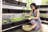 """Thời khoe ngực """"khủng"""" đã qua rồi, giờ Elly Trần nổi tiếng vừa chăm con khéo tay trồng rau với cả khu vườn xanh mướt và trĩu quả"""