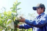 Chàng trai 9X thu lời 1,5 tỷ/năm nhờ 1 ha vườn trồng