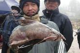 Bộ tứ đặc sản cá cực hiếm ở miền núi, có tiền cũng khó mua
