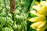 Những loại trái cây 'sốt' giá nhờ Trung Quốc tăng mua