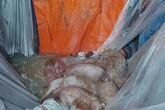 Hải Phòng: Số lợn buộc tiêu hủy do nhiễm dịch tả tiếp tục tăng