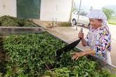 Dược liệu Việt làm ra chất lượng tốt nhưng đơn vị sản xuất không biết cách giới thiệu