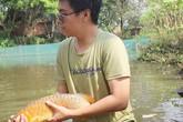 """Du học ngành ẩm thực, 8x lại về quê nuôi """"cá vua"""" trong ao làng"""