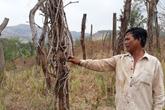 """Huyện Chư Pưh, tỉnh Gia Lai: Người dân lao đao vì  """"vàng đen"""""""