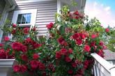 """7 loại cây """"xịn"""" như điều hòa, giúp nhà mát lịm dù trời nóng đổ lửa"""