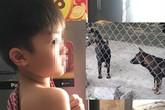 Vụ cháu bé 7 tuổi bị đàn chó tấn công tử vong: Nhiều nạn nhân đã từng bị chó cắn