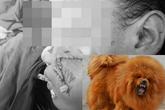 Thương tâm những vụ chó cắn trẻ nát mặt, đứt bộ phận sinh dục thậm chí tử vong