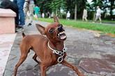 Hòa Bình: Cả nhà bất ngờ bị chó dại cắn, 2 trong 4 người tử vong