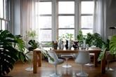 Cách tạo điểm nhấn cho căn nhà bằng cây cảnh