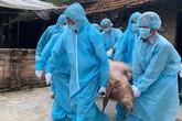 Dịch tả lợn Châu Phi lan rộng 29 tỉnh, huy động công an, quân đội vào cuộc