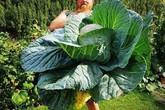 Những loại rau củ khổng lồ tưởng như chỉ có trong phim ảnh nhưng có thật ngoài đời