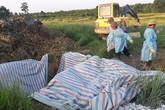Tiếp tục phát hiện ổ dịch tả lợn châu Phi tại Hà Tĩnh