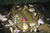 Hà Tĩnh: Hàng chục con lợn chết bọc trong bao tải trôi trên kênh