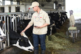 Nguồn sữa đầu vào chất lượng: Yếu tố tiên quyết làm nên chuẩn sữa tươi Cô Gái Hà Lan