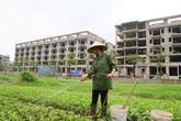 Hà Nội: Vì sao dự án Trường THPT chất lượng cao Mùa Xuân ở quận Long Biên lại bị người dân phản đối?