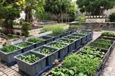 Khu vườn 100m² rau quả gì cũng có của mẹ đảm hai con xinh đẹp ở Sóc Trăng
