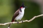 Thâm cung bí sử (182 - 1): Chim mồi không biết hót