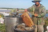 Luyện ong làm mật ngọt từ...biển mặn, thu 2-3 triệu/ngày