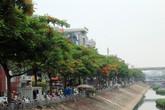 Hàng phượng vĩ đỏ rực, cuốn hút dọc hai bờ sông Tô Lịch