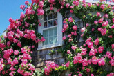 Cuộc sống bình yên, tự tại trong những ngôi nhà ngập tràn nắng gió và hương thơm hoa cỏ