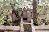 Gia đình xây nhà 4 tầng bao quanh cây cổ thụ