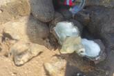Nam Định: Chị em đội nắng 40 độ, săn con tốt cho sinh lý đàn ông