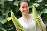 Thân Thúy Hà thu hoạch mướp ăn thay cơm