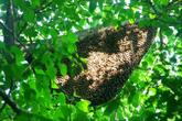 Đi lấy mật ong rừng, người đàn ông ở Hà Tĩnh bị ong đốt tử vong