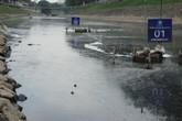 Sông Tô Lịch cạn đáy, nổi váng đen kịt bất chấp máy lọc công nghệ Nano hoạt động hết công suất