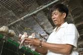 Kiếm nửa tỷ mỗi năm nhờ mê nuôi bồ câu kiểng
