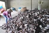 Gần 1.000 tấn mực khô ứ đọng vì Trung Quốc ngừng thu mua