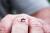 Nam thanh niên tử vong vì sốt xuất huyết
