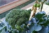 4 loại rau xanh chống ung thư cực tốt, vừa ngon vừa rẻ nhưng nhiều người Việt vẫn bỏ qua