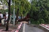 Hà Nội: Trú mưa, nam thanh niên bị cây đổ đè chết