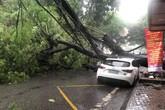 Hải Phòng mưa lớn, cây đổ làm 1 người bị thương
