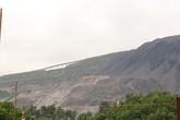 Phù phép cây lâu năm trong đất dự án, người dân thu lợi bất chính hàng chục tỷ đồng