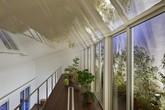 Ngôi nhà hai tầng gây ấn tượng mạnh vì sở hữu 1 hành lang dài được xếp toàn cây cảnh