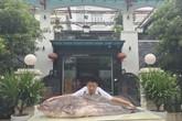 """Phát hoảng cá leo """"to chưa từng thấy"""" xuất hiện ở vùng đất Kinh Bắc"""