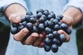 Một phụ nữ suýt mất mạng vì ăn quá nhiều nho, bác sĩ cảnh báo 3 lưu ý khi ăn trái cây kẻo tàn phá sức khỏe