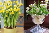 10 loại hoa nếu trồng có thể gây nguy hiểm cho sức khỏe nhưng bạn có thể không biết